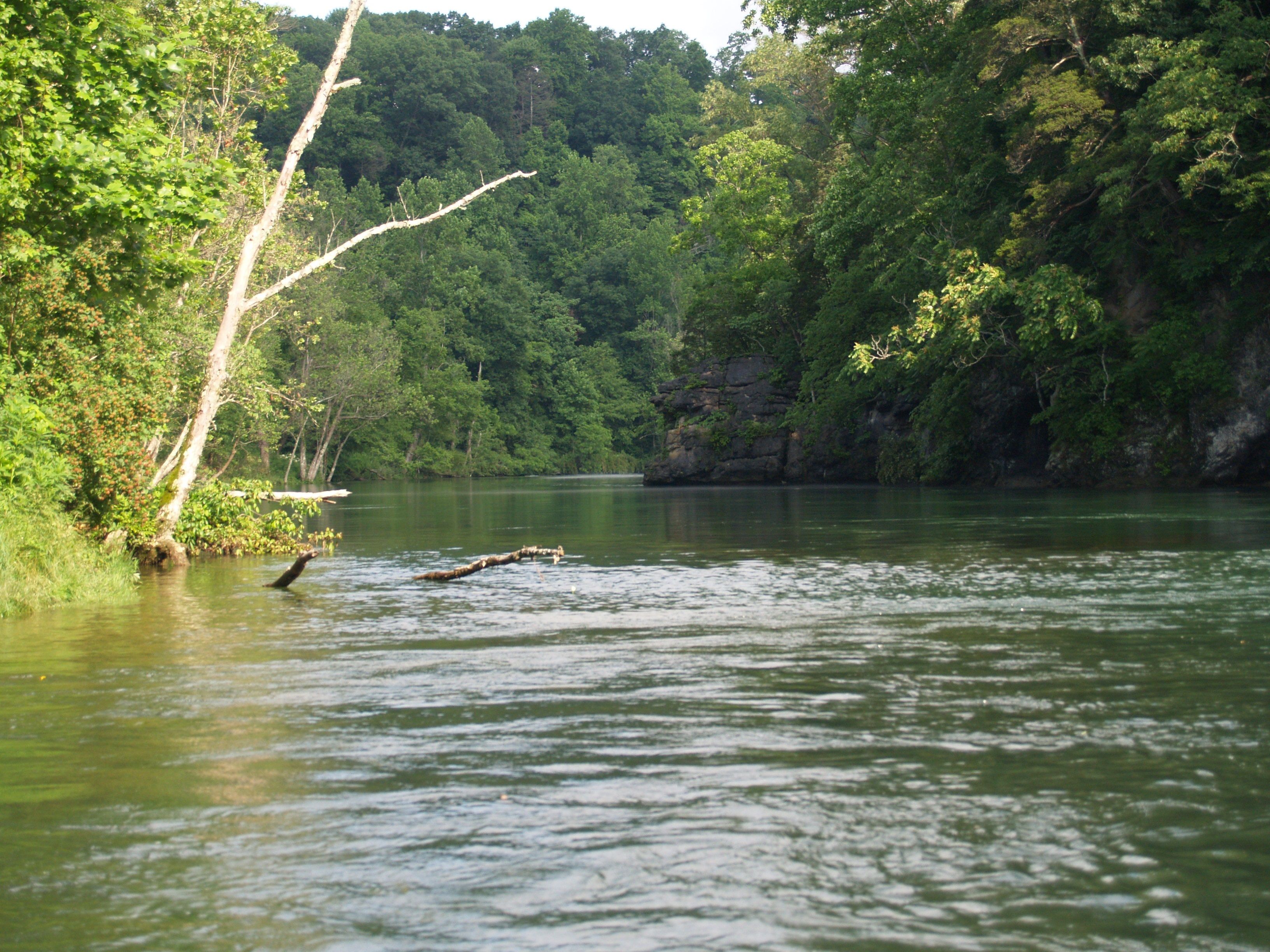 Watauga river description brown trout fly fishing for Fishing in boone nc